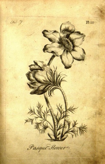 Historical Garden Books - 87 in a series - The florist :containing sixty plates of the most beautiful flowers... (1760)