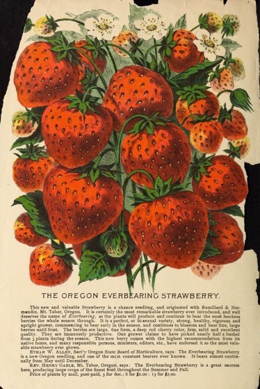 Historical Seed Catalogs - 71 in a series - Wilson's 15th annual price list and catalogue of fresh and reliable garden, field, and flower seeds (1891)