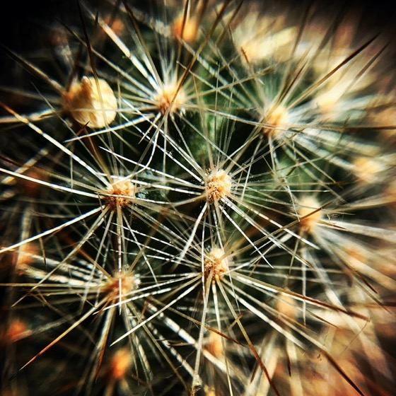 Cactus Closeup via Instagram