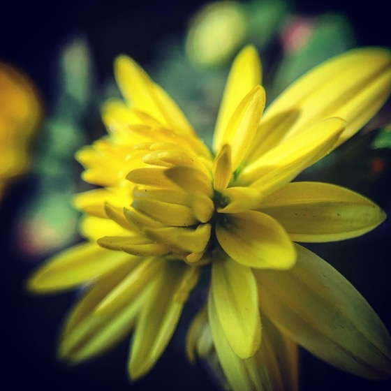Mini Mum In Macro via Instagram