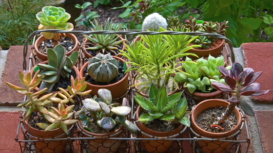 5 of Monty Don's favourite succulents and top tips on how to grow them via Gardening, etc