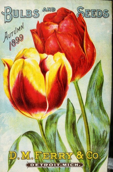 Historical Seed Catalogs - 86 in a series - Bulbs And Seeds: Autumn 1899 By D.M. Ferry & Co