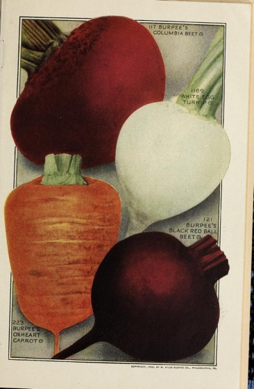 Historical Seed Catalogs - 88 in a series - Burpees Annual (1921) Root veg