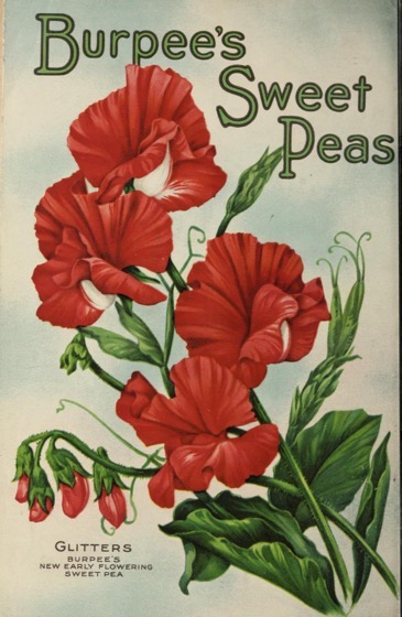 Historical Seed Catalogs - 88 in a series - Burpees Annual (1921) Back Cover