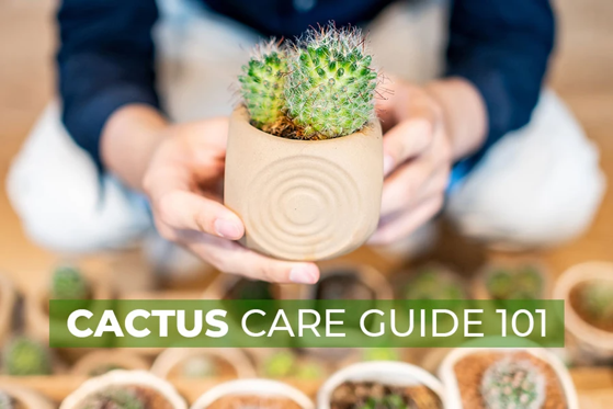Captivating Cactus and Striking Succulents - 63 in a series - Cactus Care Guide 101 via Succulents Box