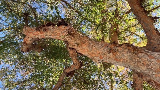The Elm Tree from A Gardener's Notebook [Video]