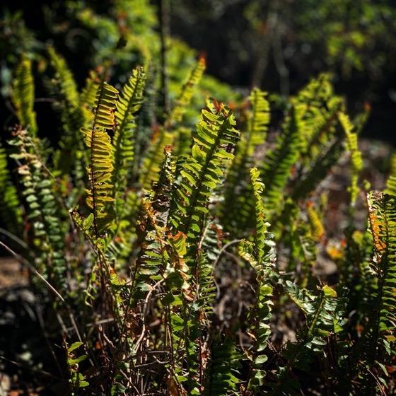 Garden Ferns via Instagram