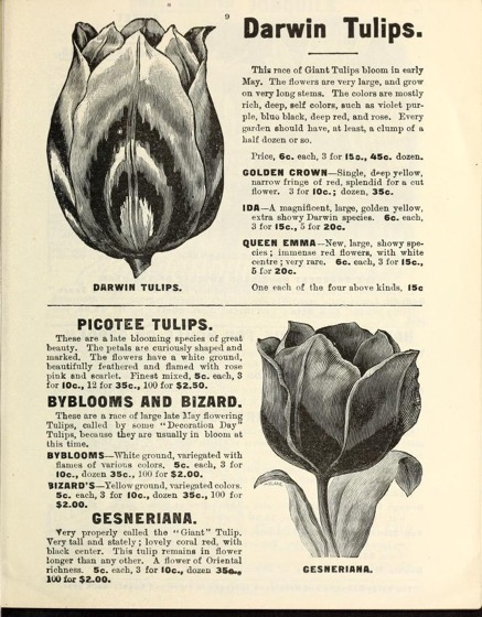 Historical Seed Catalogs - 89 in a series - Flowers : Christmas, Easter, midwinter and spring (1901) by Miss Mary E. Martin