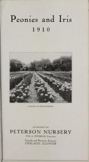 Historical Seed Catalogs - 94 in a series - Peonies and iris (1910) by Peterson Nursery