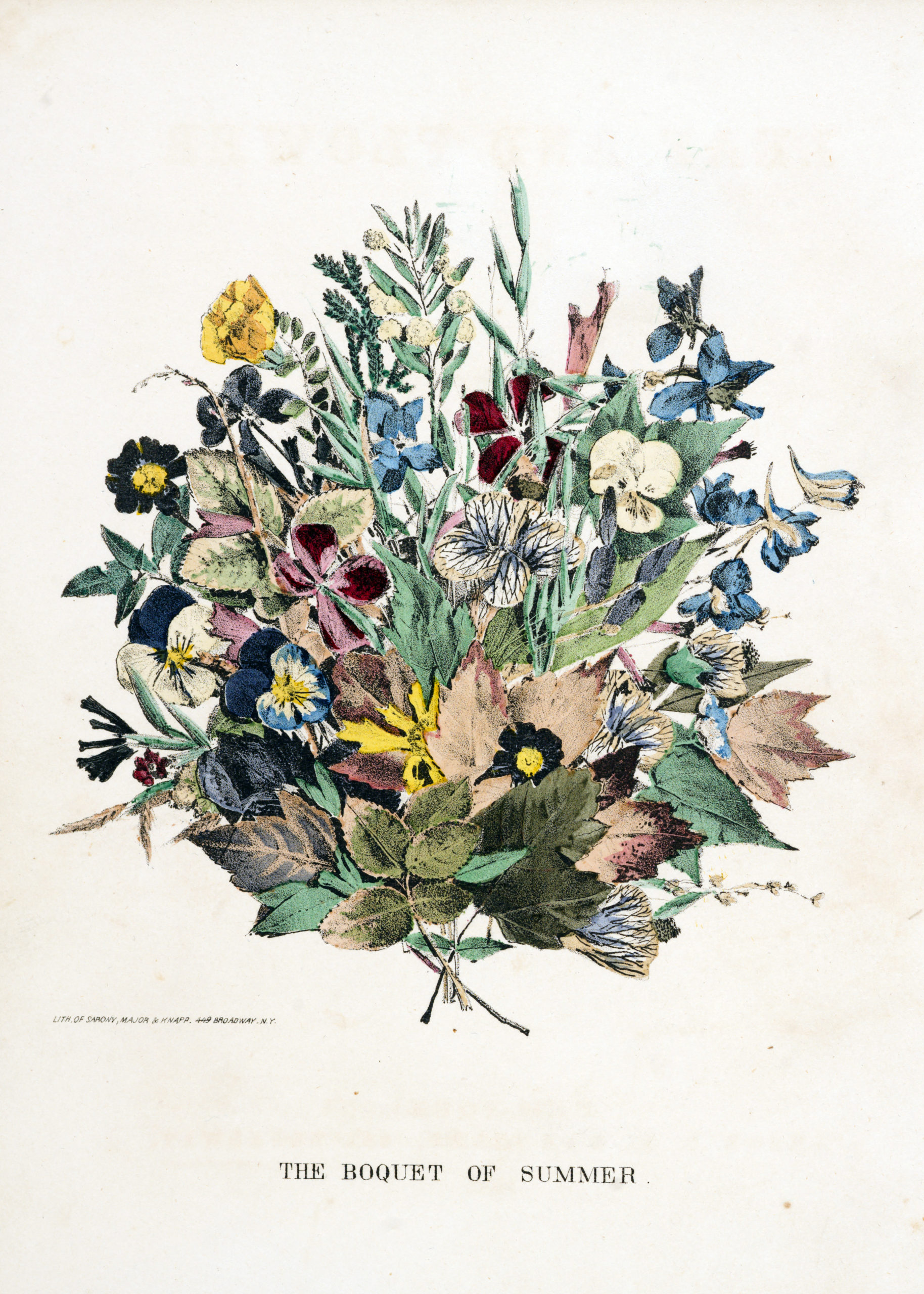 Vintage Botanical Prints - 31 in a series -