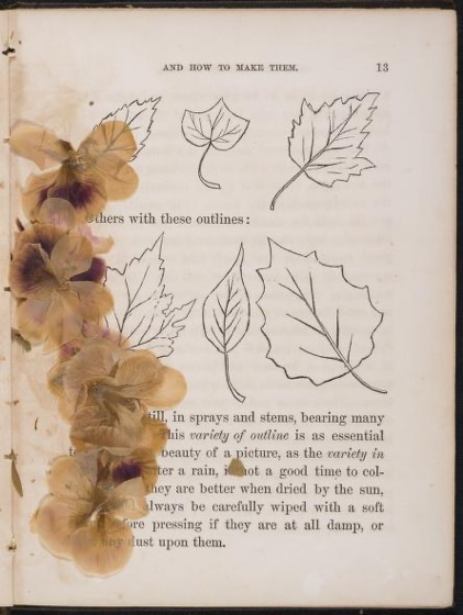 Historical Garden Books - 114 in a series - Leaf And Flower Pictures, And How To Make Them (1859)