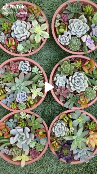 Captivating Cactus and Striking Succulents - 65 in a series - Lovely succulent container arrangements via The Happy Plant on TikTok