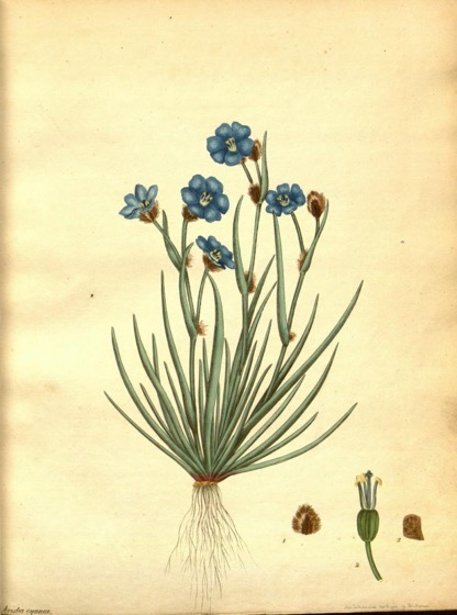 Historical Garden Books - 113 in a series - The botanist's repository for new, and rare plants... (1797)