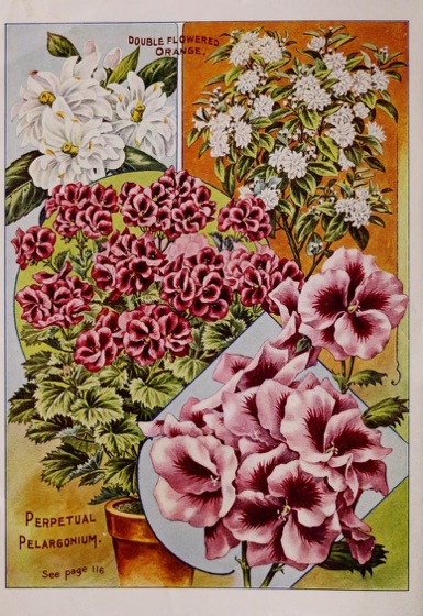 Historical Seed Catalogs - 97 in a series - Childs' Rare Flowers, Vegetables & Fruits (1915) art