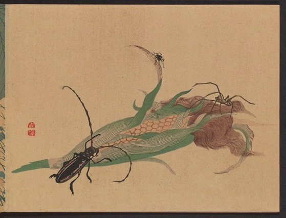 Historical Garden Books - 116 in a series - Chūka senzen (Selected Insects from Close at Hand) (1889) by Shunkei Mori