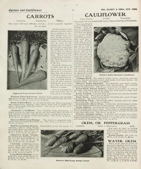 Historical Seed Catalogs - 98 in a series - General catalogue for William Elliott & Sons (1912) Inside Page