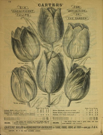 Historical Seed Catalogs - 99 in a series - Bulbs For Winter and Spring by James Carter & Co. (1842) Tulips