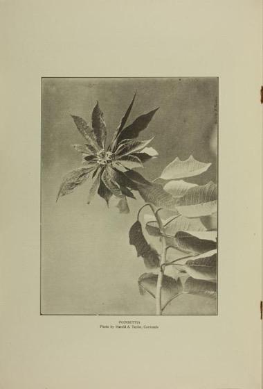 Historical Garden Books - 119 in a series - California Garden, Vol.1, No. 6, December 1909 by San Diego Floral Association Plate
