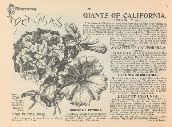 Historical Seed Catalogs - 100 in a series - Choice flower seeds (1900) by Emma V. White Petunias