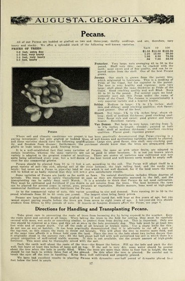 Historical Seed Catalogs - 101 in a series - P.J. Berckmans Co., Incorporated Fruitland Nurseries (1914)