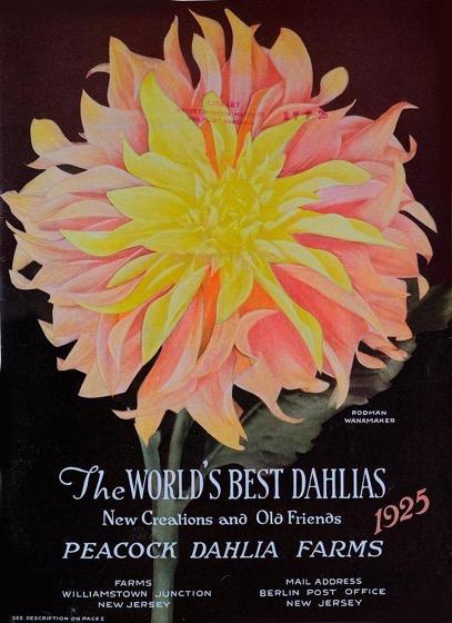Dazzling Dahlias - 63 in a series - The world's best dahlias by Peacock Dahlia Farms Cover