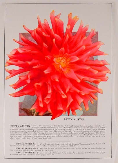 Dazzling Dahlias - 63 in a series - The world's best dahlias by Peacock Dahlia Farms Color Page