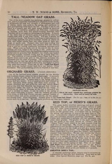 Historical Seed Catalogs - 103 in a series - Seeds & bulbs for fall planting (1902) by T.W. Wood & Sons