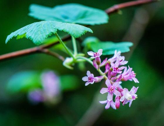 Garden tip: Bring some native plant color into your garden via Mercury News