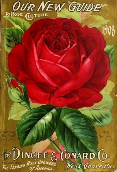 Historical Seed Catalogs - 105 in a series - Our new guide to rose culture (1908) by Dingee & Conard Co.