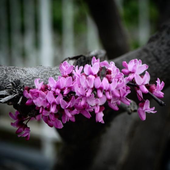 The trees are flowering in the neighborhood via Instagram