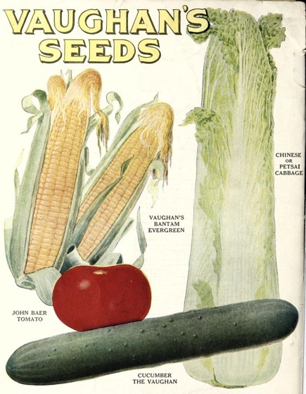 Historical Seed Catalogs - 109 in a series - Vaughan's Gardening Illustrated (1921)
