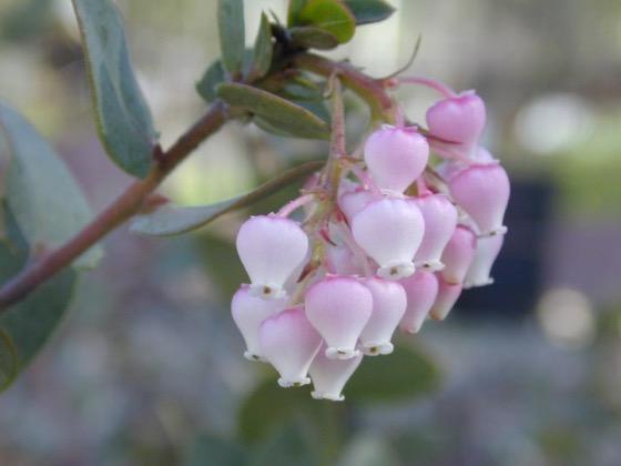 Garden Q&A - Year-round color in a California native garden via California Native Plant Society