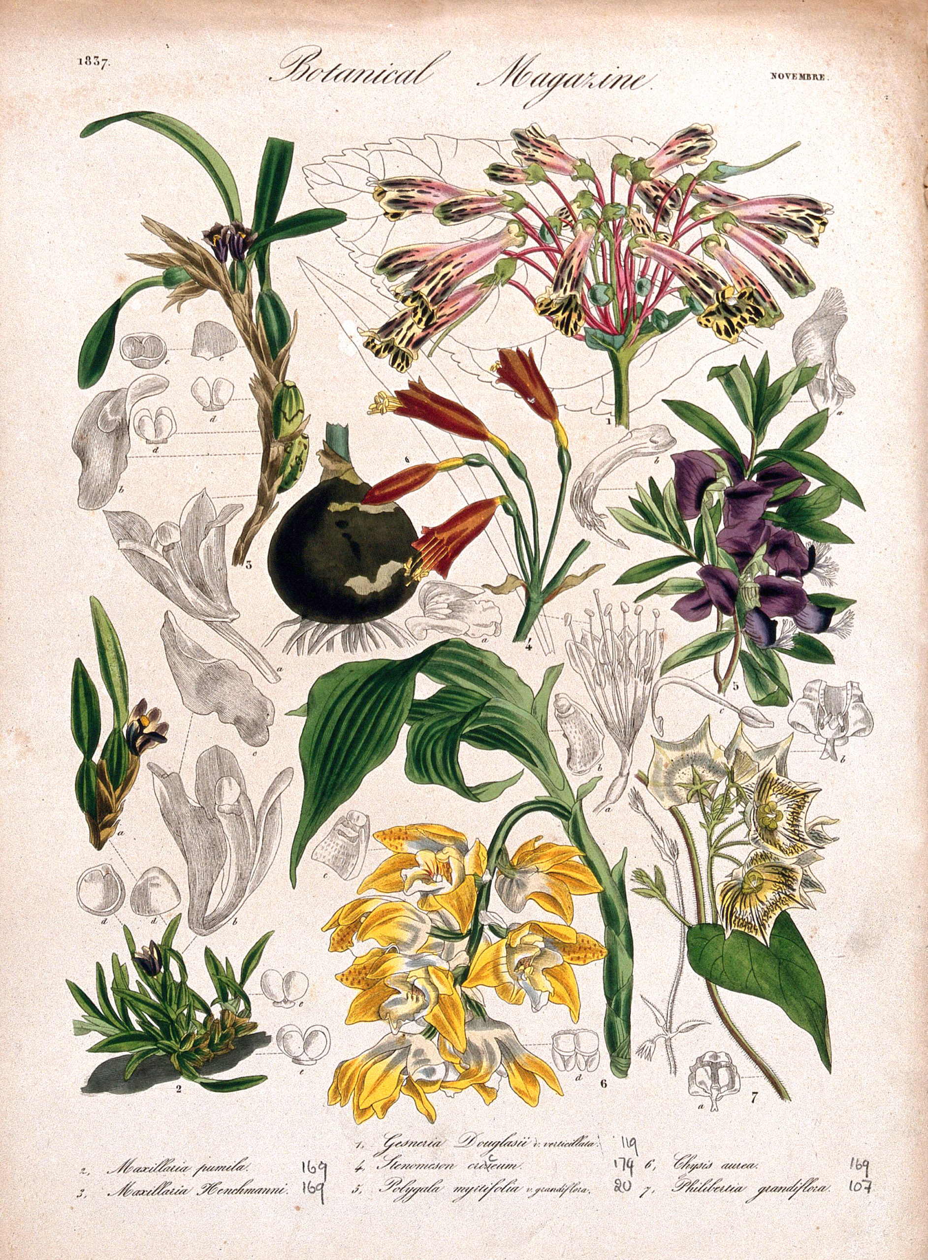Vintage Botanical Prints - 51 in a series -  Seven plants, including three orchids and a gesneria: flowering stems and floral segments.(c. 1837)