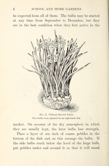 Historical Garden Books - 139 in a series - School and home gardens (1913) by William Herman Dietrich Meier