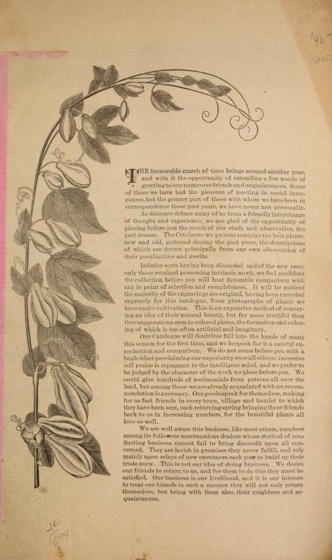 Historical Seed Catalogs - 118 in a series - Miller & Hunt Florists (1884)