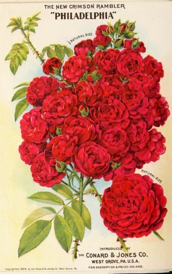 Historical Seed Catalogs - 116 in a series - New floral guide (1904)