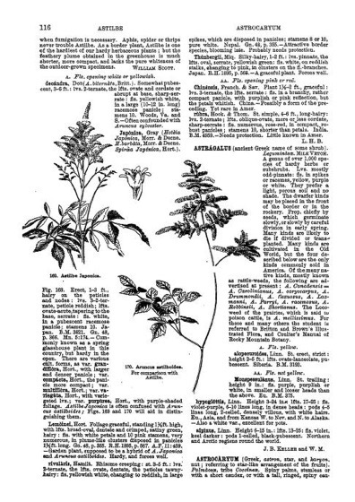 Historical Garden Books - 143 in a series - Cyclopedia Of American Horticulture Vol-(a-d) (In 4 Volumes) (1900) by L. H. Bailey
