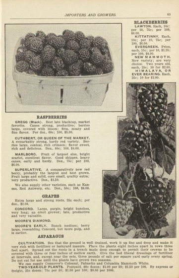Historical Seed Catalogs - 123 in a series - Aabling Boyce Seed Co (1916)