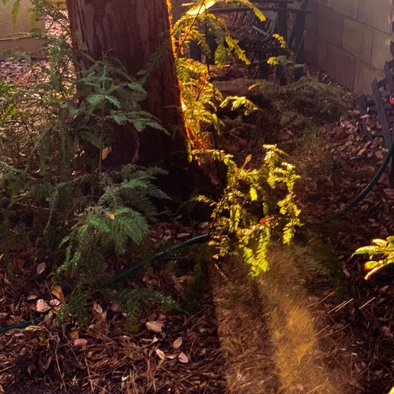 Watering the garden at sunset