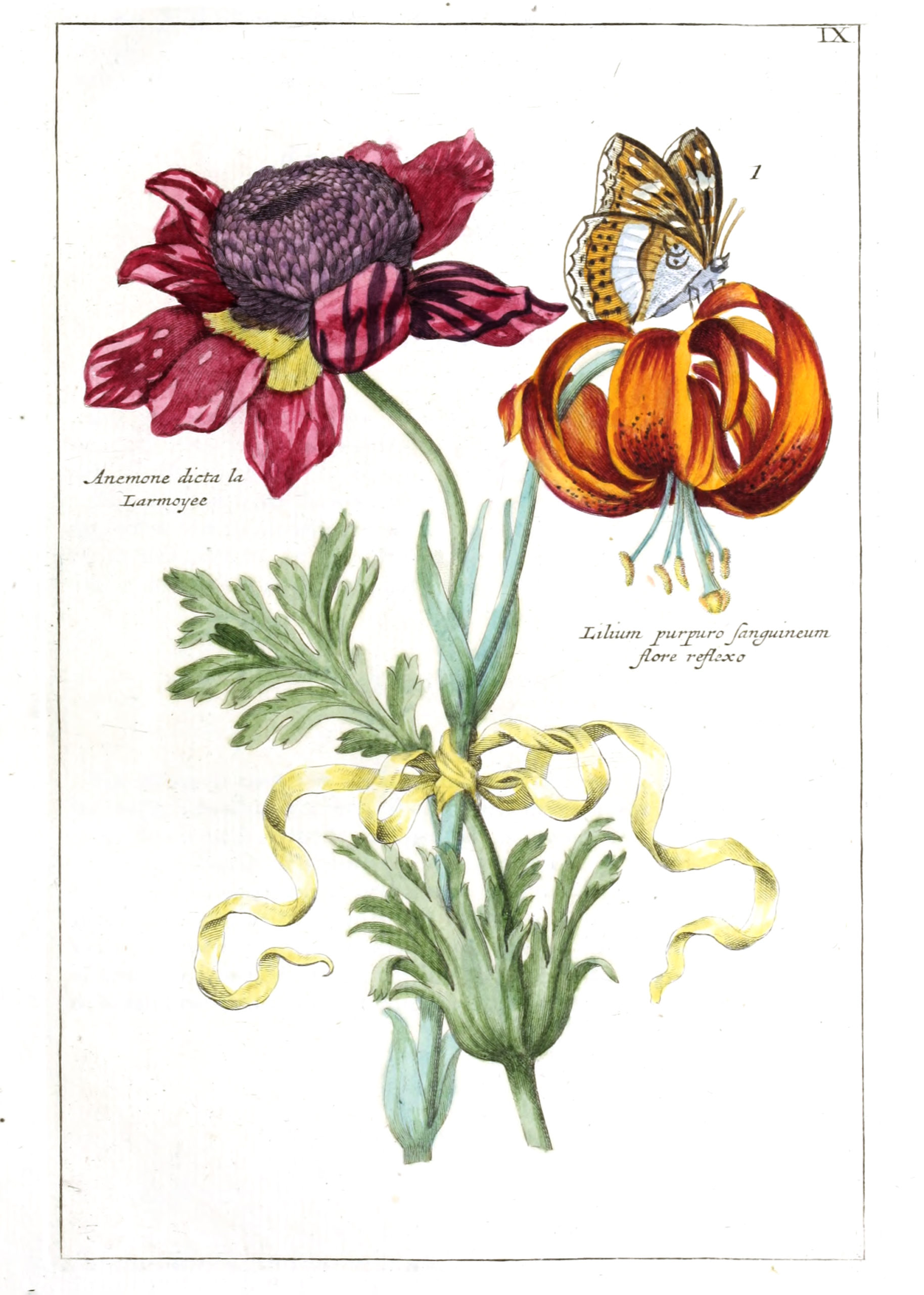 Vintage Botanical Prints - 60 in a series - Anemone and Lilium from Nederlandsch bloemwerk (1794)