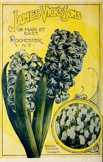 Historical Seed Catalogs - 125 in a series - Vick'S catalog (1903)