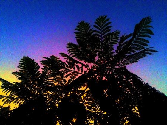 Jacaranda sunset