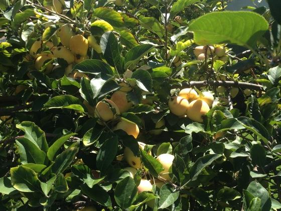 New Food: Maple-Walnut Apple Crisp