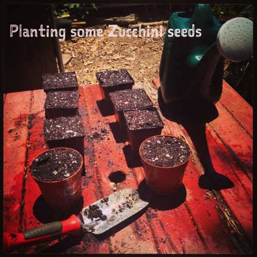Planting Zucchini Seeds