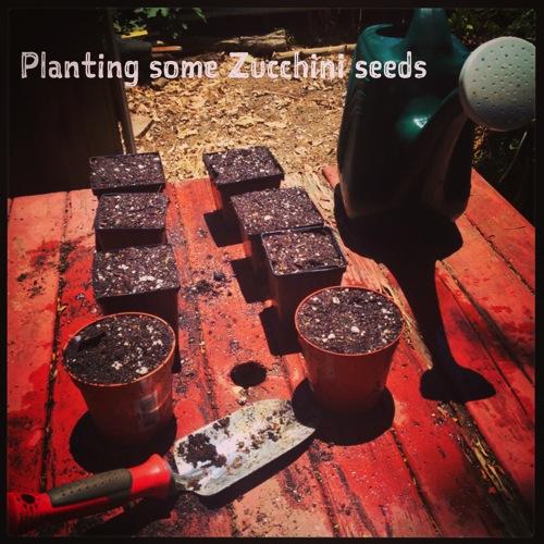Planting Zucchini Seeds