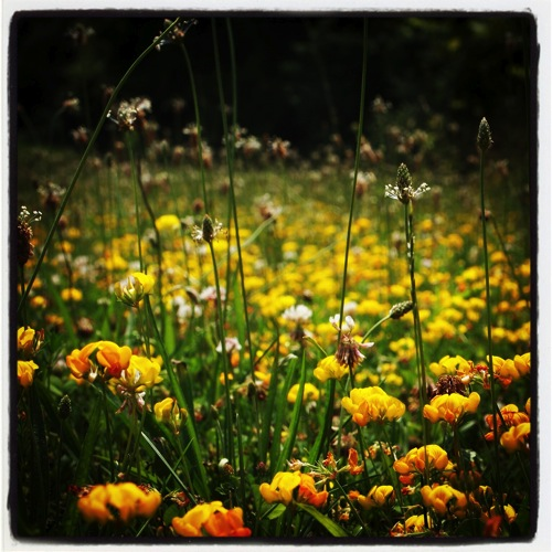 Photo: In the meadow via #instagram