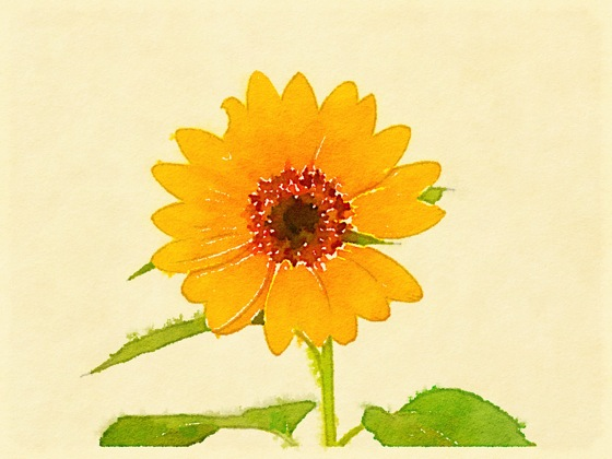 Photo: Sunflower via #instagram and #waterlogue app