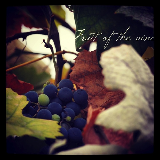 Photo: Fruit of the vine via #instagram