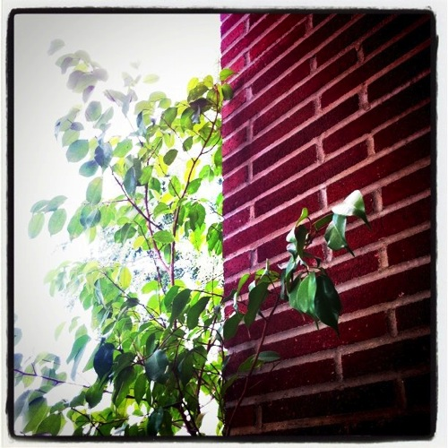 Photo: Tree and Wall via #instagram #photography