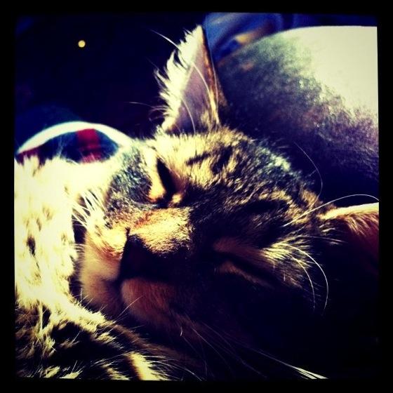 Photo: Kitty via #instagram